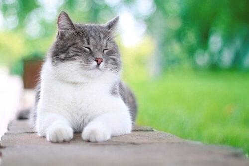 5 ting som gjør katter lykkelige