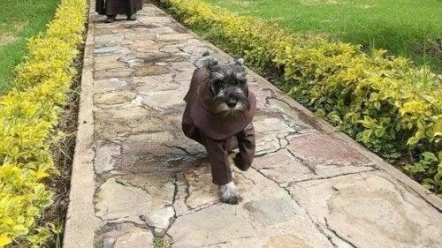 Historien om løshunden som kom til et kloster og ble en munk