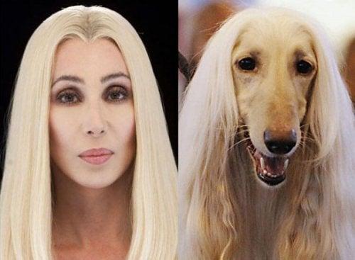 Hvorfor eiere og hunder ligner på hverandre