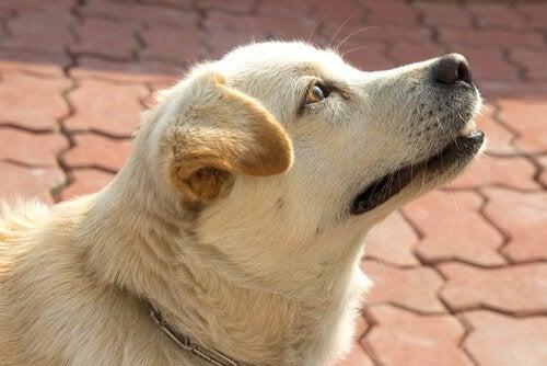 Visste du at hunder forstår tid? De gjør det gjennom nesen!