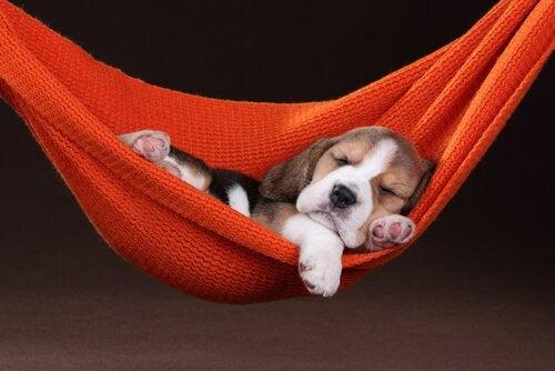 Søvn hos kjæledyr: Kan våre pelskledde venner drømme?