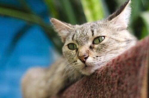 En katt som slapper av