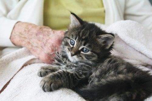 Katt for a senior