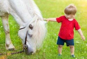 Hestene kan fornemme våre følelser