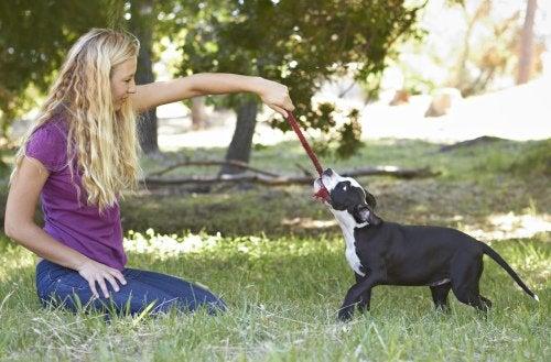 Hund og kvinne leker i parken