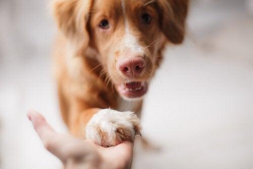 Hvordan ta vare på en hund i økonomiske nedgangstider