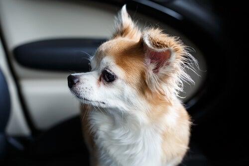 En mann ødelegger bilvinduer på en dyr bil for å redde en hund