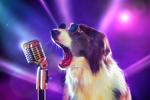 8 sanger du ikke visste at handlet om hunder