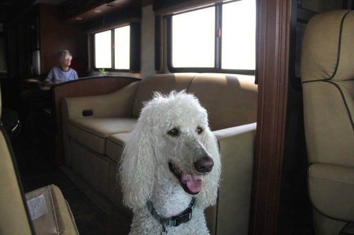90 år gammel dame reiser med hunden sin gjennom USA