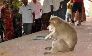ape hund vennskap Foto: www.elheraldo.hn, the Facebook of Dinamalar