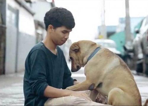 En ung thailandsk mann gir hjemløse hunder sine første klemmer