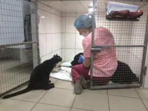 Lucifer katten som hjelper andre