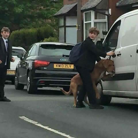 Bradley, gutten som reddet en hund fra å bli kvalt av sitt eget bånd