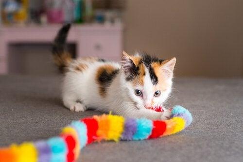 tre-farget kattunge