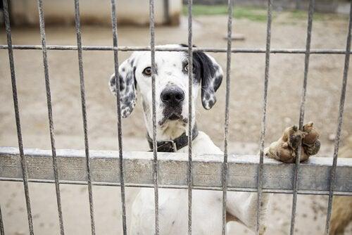 Lær hvordan du kan rapportere dyremishandling på internett
