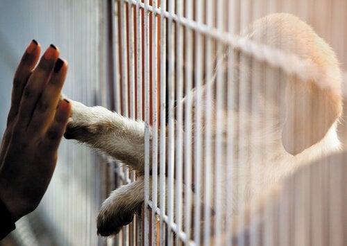Selv om du ikke har mulighet til å adoptere, kan du fortsatt hjelpe dyr!