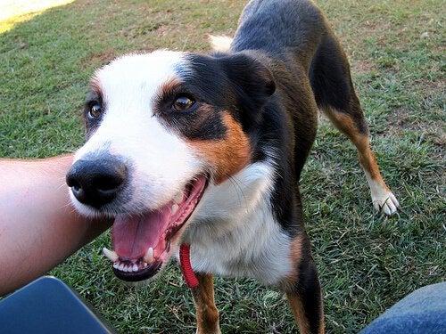 Ditt kjæledyrs mentale helse: Dette bør du vite