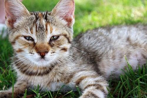 Nei, katter er ikke smartere enn hunder