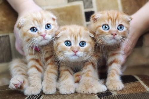 Katteallergier: årsaker, symptomer og forebygging