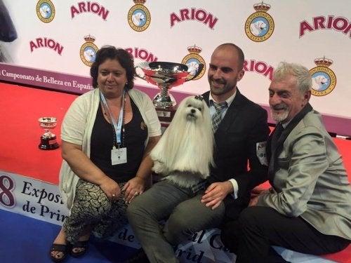 En Malteser er vinneren av hundekonkurransen i Spania