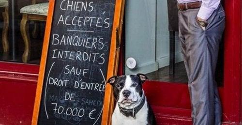 En restaurant i Paris tillater hunder, men nekter bankfolk adgang