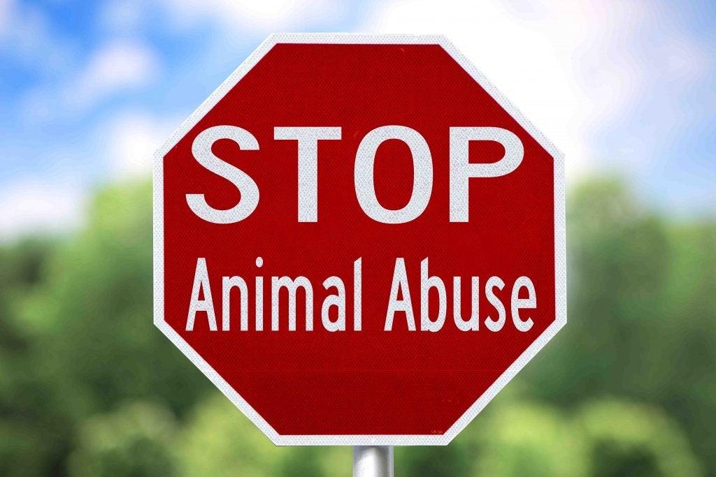 Skilt der det står: Stopp dyremishandling