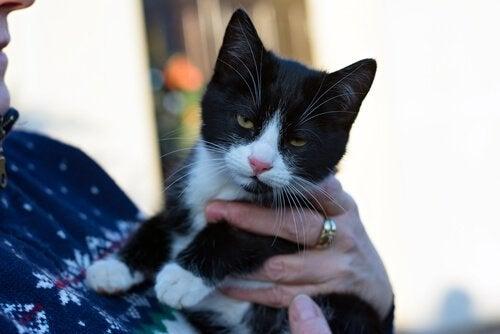 En studie om hvordan katter kommuniserer med eierne sine