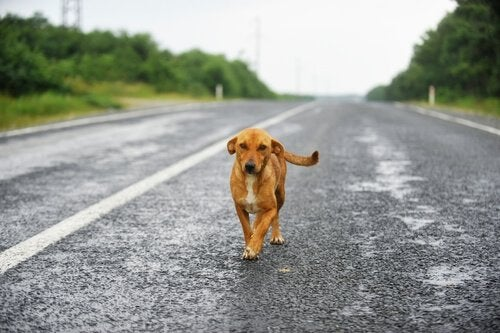 En fører fra Uruguay fløy gjennom luften for å redde en hunds liv