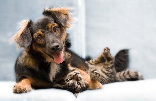 valp leker med katt