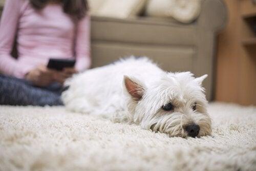 Kan hunder fryse når det er kaldt utendørs?
