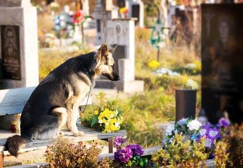 Hukommelse hos hunder: Hvor lenge husker de en person?