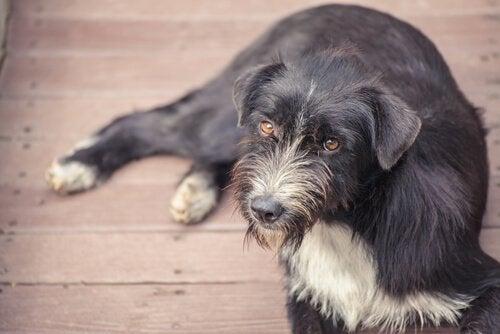 Tørrfôr med prevensjonsmidler for hjemløse hunder