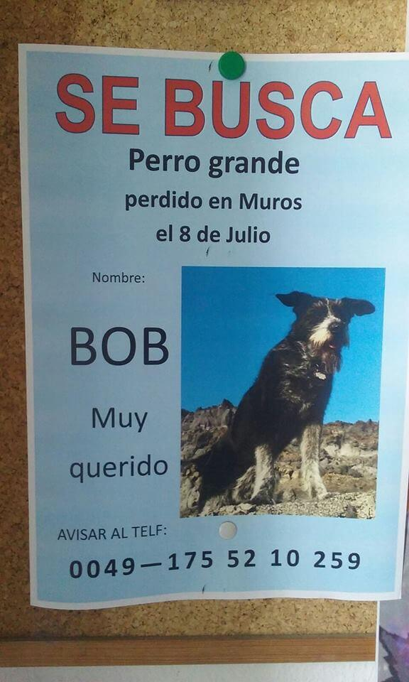 Plakat av hund som har forsvunnet Kilde : Facebook