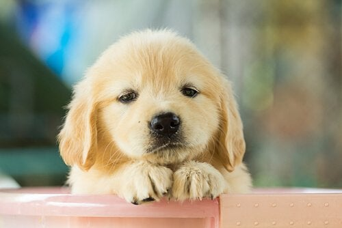 din hund er trist