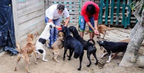 En organisasjon for dyrebeskyttelse ble kastet ut