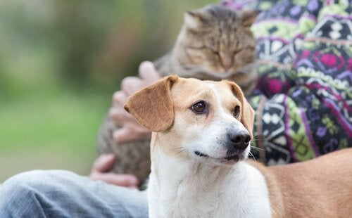 Kvinne sitter med en katt og en hund: snakk med kjæledyret ditt.