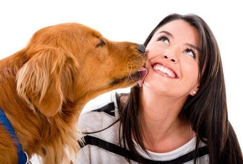 7 tegn på at hunden din er glad i deg