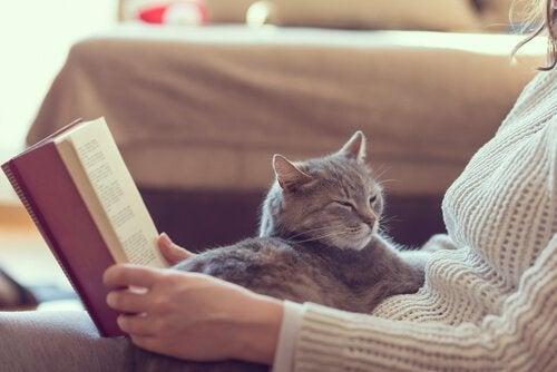 De 10 beste fordelene ved å ha en katt hjemme