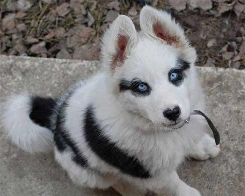 Åtte hunder med unike mønster