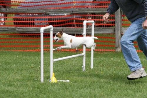 Hund hopper over en hindring