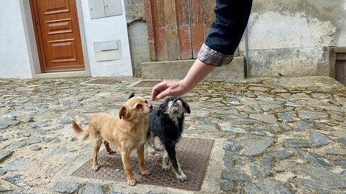 6 tips for å vinne din hunds tillit
