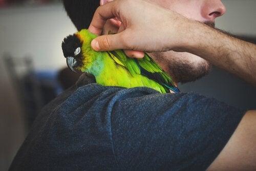 Mann med papegøye på skulder