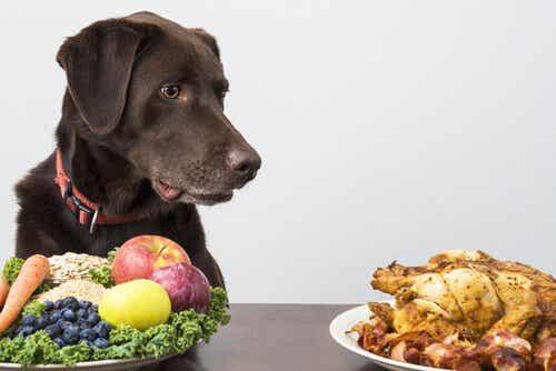 Tips for å gi hunden en hjemmelaget kost