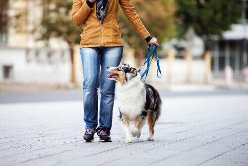 Kvinne går med hunden sin med slakk på båndet