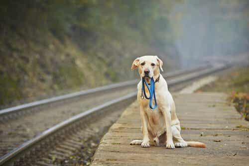 Hva skal du gjøre hvis du ser en bortkommen hund?
