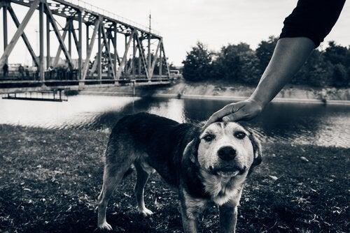 De siste hundene i Tsjernobyl