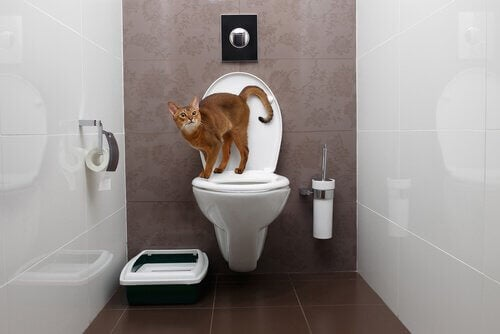 En katt som står på toppen av et toalett