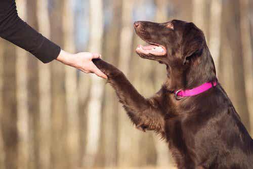 Hvordan øke hundens intelligens