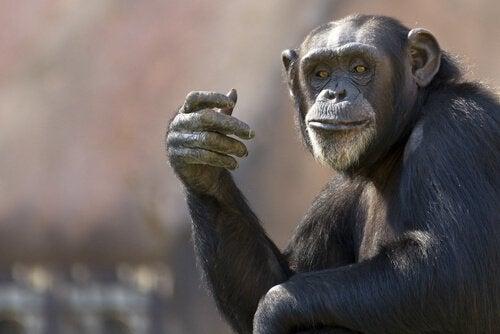 De fem mest intelligente dyrene i verden