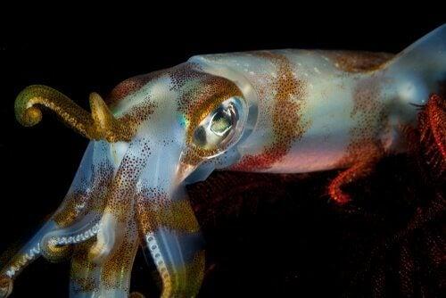 Forskjellen mellom andre blekkspruter og sepiida